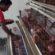 নিঃস্ব হয়ে পোল্ট্রি ব্যবসা গুটিয়ে নিচ্ছেন দেশের ক্ষুদ্র খামারিরা