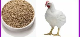 Yeast probiotics in broilers: benefits for the whole production chain