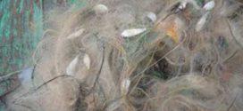 মৎস্যসম্পদ রক্ষার জন্য কারেন্ট জালসহ সকল প্রকার অবৈধ জাল উচ্ছেদের আহবান মৎস্য প্রতিমন্ত্রীর