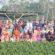 ফুলের রাজ্য গদখালীতে বশেরমুরবিপ্রবি'র কৃষি বিভাগের শিক্ষাসফর
