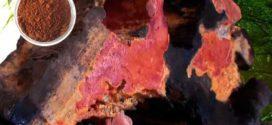 উচ্চ রক্তচাপের চিকিৎসায় আলোড়ন সৃষ্টিকারী 'নিউ ঝাং ঝি' মাশরুম