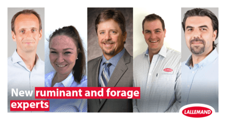 Lallemand Animal nutrition strengthens its ruminant and forage technical team around the world