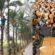 যশোরে ঐতিহ্যবাহী খেজুরের গুড়-পাটালি তৈরির মহাউৎসব