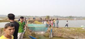 সাতক্ষীরায় খালে অবৈধ বাঁধ নির্মাণ করে মাছ চাষ