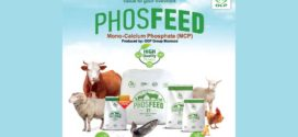 PHOSFEED® Strengthens the Skeleton and Accelerates the Animal's Growth