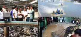 বায়োফ্লক, ট্যাংক কালচার এবং আরএএস পদ্ধতিতে মাছ চাষ