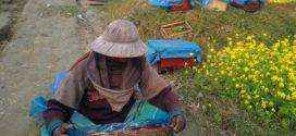বৈরী আবহাওয়ায় কমে যাচ্ছে মধু উৎপাদন : হতাশ পাবনার মধু চাষিরা