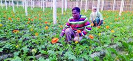 বাণিজ্যিক ফুল চাষ সম্প্রসারণে যশোরে হবে টিস্যু কালচার সেন্টার