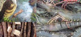 সুন্দরবনের মধু, চুঁইঝাল ও বাগদা চিংড়িকে খুলনার জিআই পণ্য করার প্রস্তাব