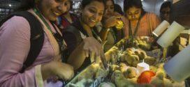 কলকাতা আন্তর্জাতিক পোলট্রি মেলার শেষদিন আজ