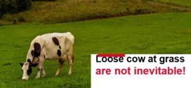 Loose cow at grass are not inevitable!