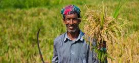 লটারীতে হবে প্রকৃত কৃষক নির্বাচন: অনিয়মে কার্ড বাতিল