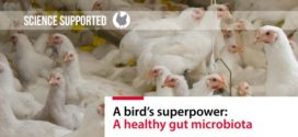 A bird's superpower: A healthy gut microbiota