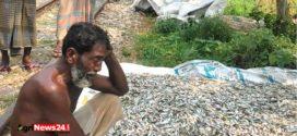 নান্দাইলে বিষ প্রয়োগে ১৩ লক্ষাধিক টাকার মাছ নিধন: অসহায় চাষির মাথায় হাত