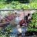 সিলেটে ভাসমান বেডে সবজি চাষে ব্যাপক সাড়া