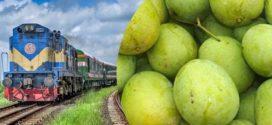 চাপাইনবাবগঞ্জ ও রাজশাহী রুটে চলছে 'ম্যাংগো স্পেশাল ট্রেন'