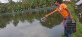 মাছ চাষ করে অভাবকে জয় করা আতাউর গাজী'র গল্প