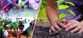 জলবায়ু পরিবর্তনের বিরূপ প্রভাব মোকাবিলায় বেশি করে গাছ লাগাতে হবে- কৃষিমন্ত্রী