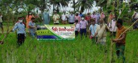 পটুয়াখালী সদরে 'পার্চিং উৎসব' উদযাপন