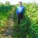 অনাবাদি ও পতিত উপকূলীয় জমিতে শিম চাষে সাফল্য