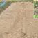 রবি মৌসুমে শাকসবজির বীজতলা তৈরি ও চারা রোপণ পদ্ধতি