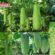 লতাজাতীয় বিভিন্ন ফসলের ফলন বৃদ্ধির আধুনিক কৌশল